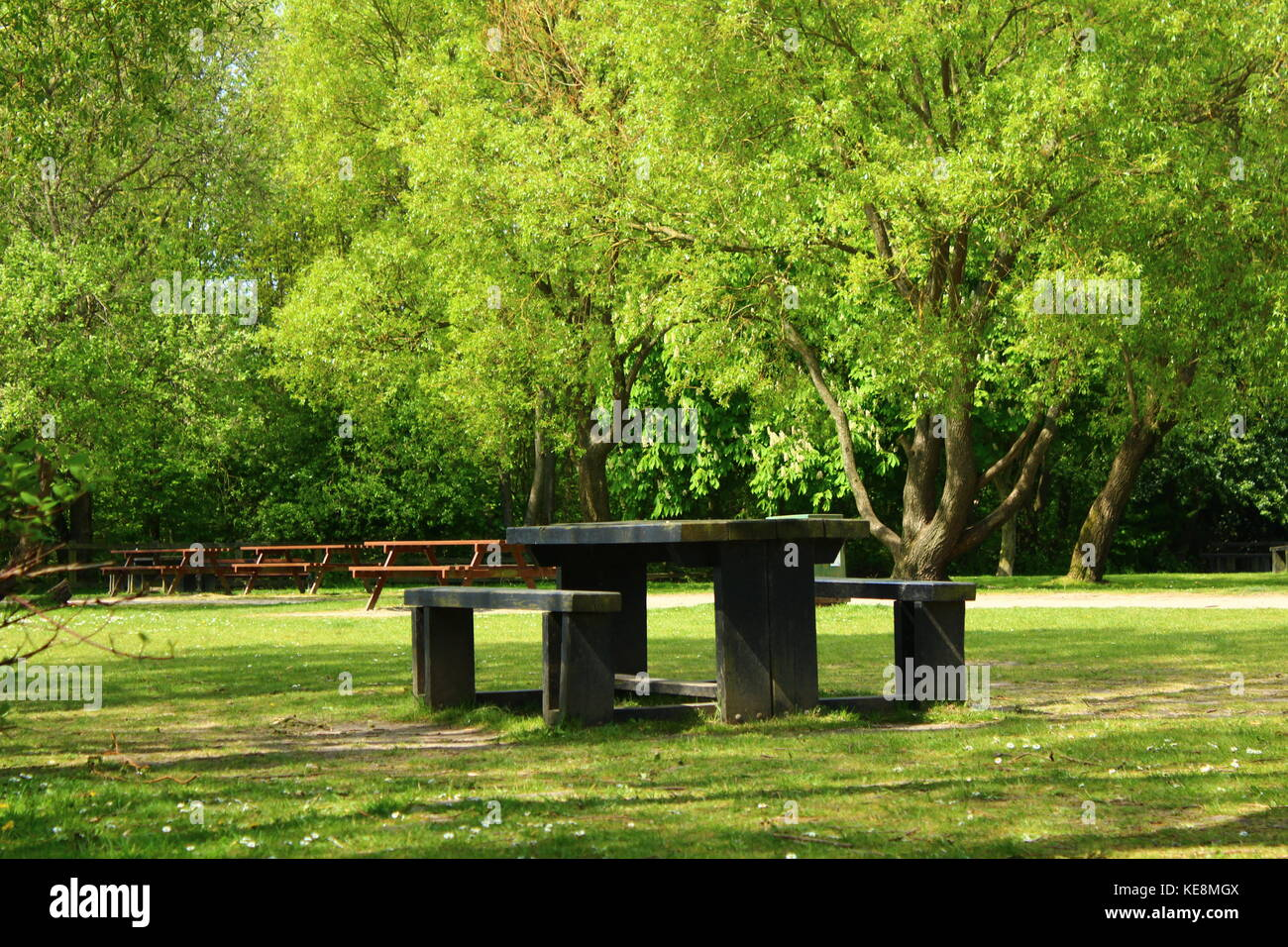 Picnic table with seats in a park surrounded by trees (Penington Flash, Leigh, UK) Stock Photo