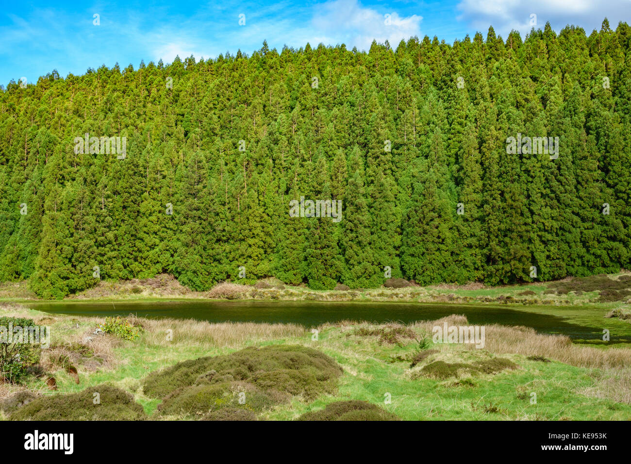 Lagoa do Negro (Black Lagoon) and forest in Terceira Island, Azores, Portugal - Stock Image