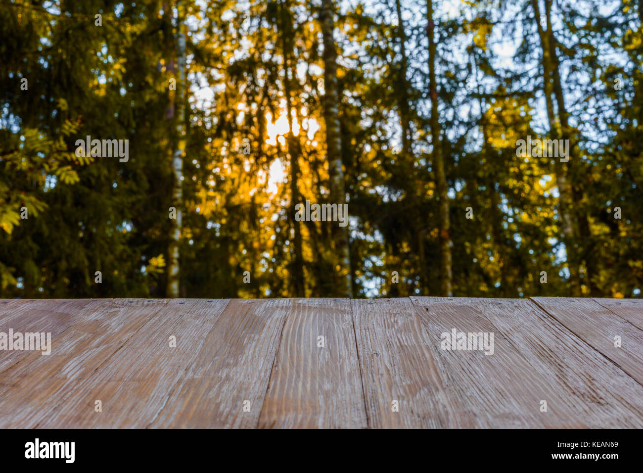 Empty Rustic Wood Table Top On Blurred Forest Background And Penetrating Sun Rays At Summer Can Montage Or Display Your Products