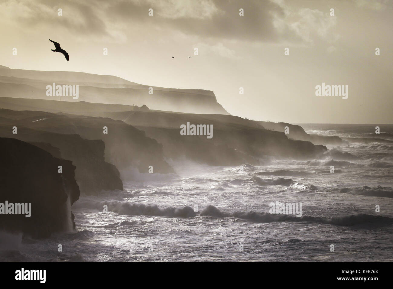 Birds flying along the cliffs of Moher near doolin - Stock Image