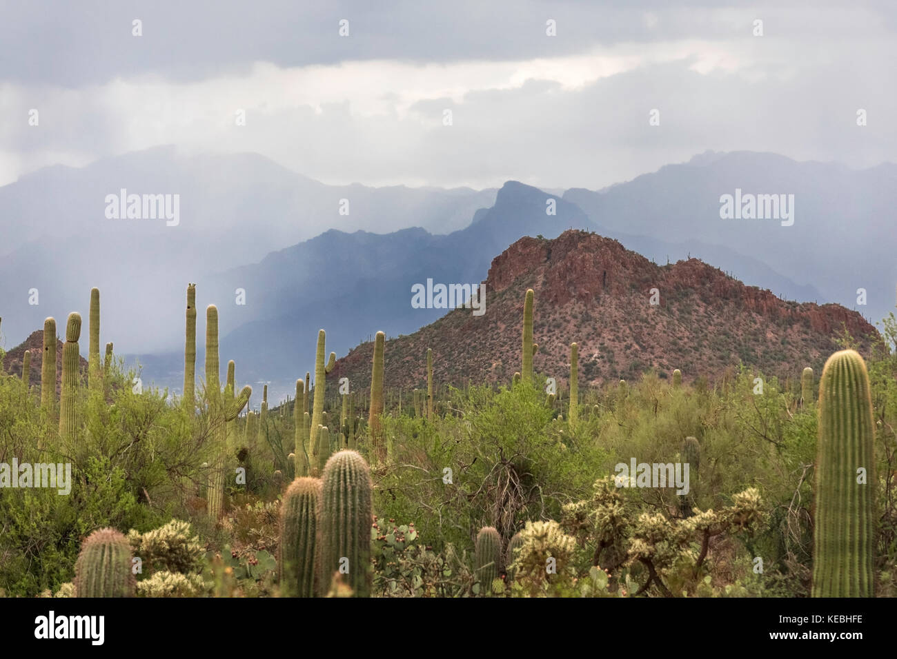 Monsoon storm, Saguaro National Park, Tucson, Arizona, USA - Stock Image