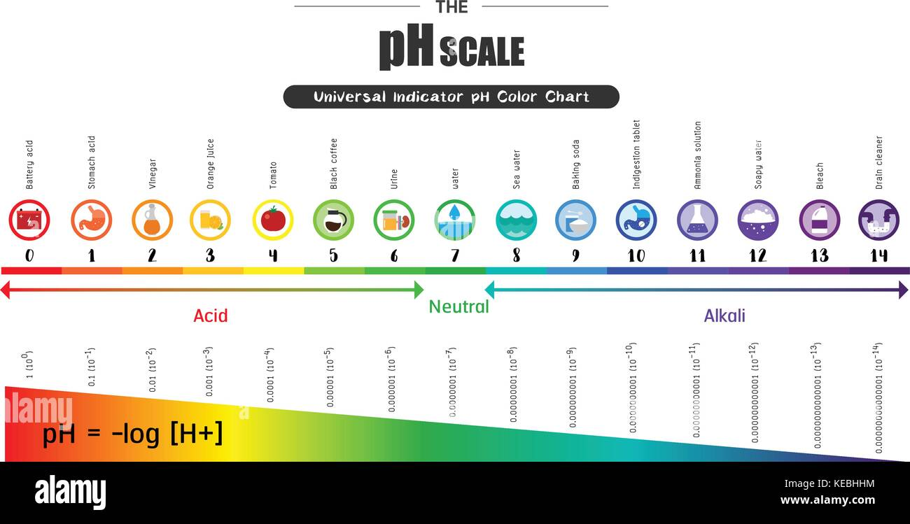 Universal indicator stock photos universal indicator stock images the ph scale universal indicator ph color chart diagram acidic alkaline values common substances vector illustration geenschuldenfo Image collections