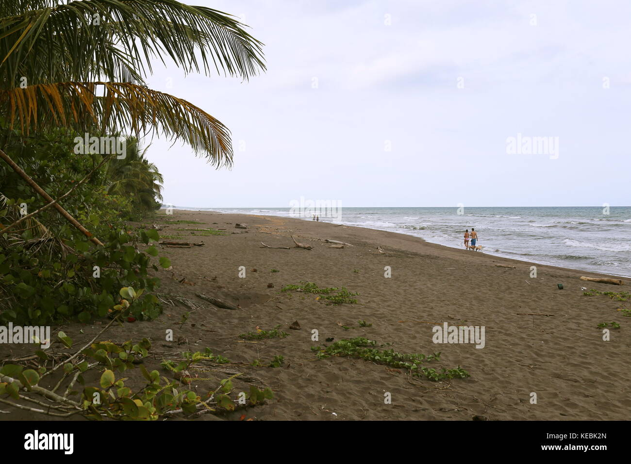Tortuguero beach, Limón province, Caribbean Sea, Costa Rica, Central America - Stock Image