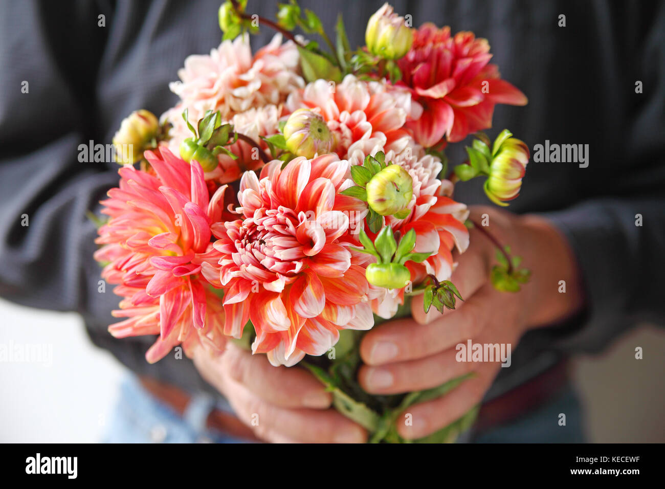 Coral Colored Flower Stock Photos & Coral Colored Flower Stock ...