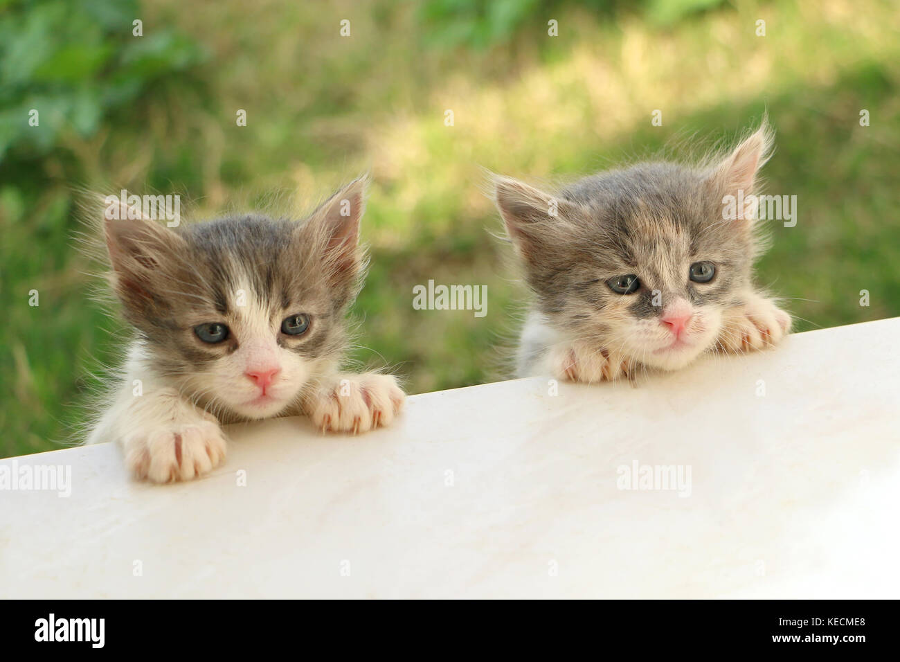 two kittens - Stock Image