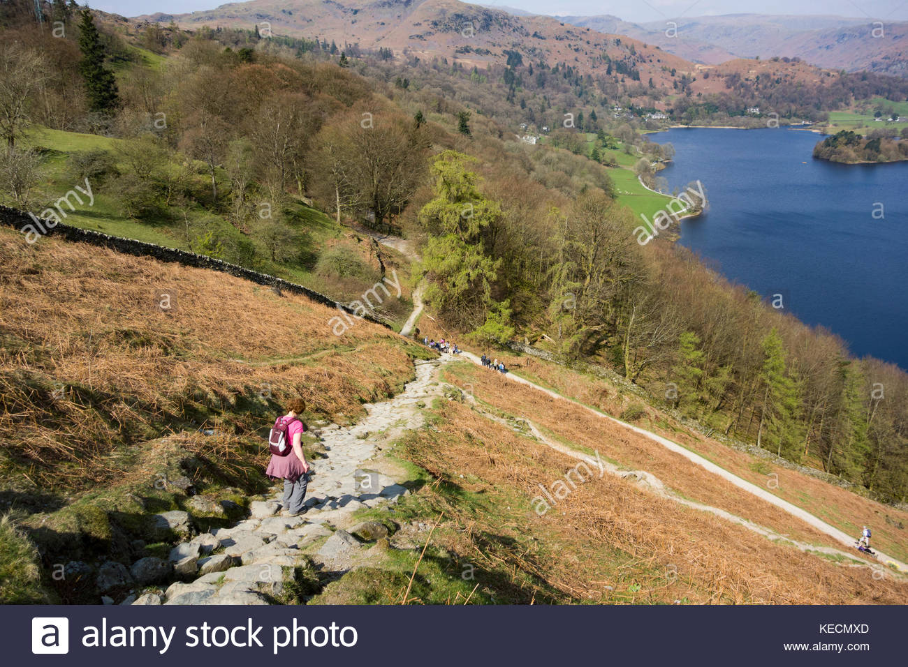 Descending on a steep, stony track off Loughrigg towards Rydal Water near Ambleside in the English Lake District - Stock Image