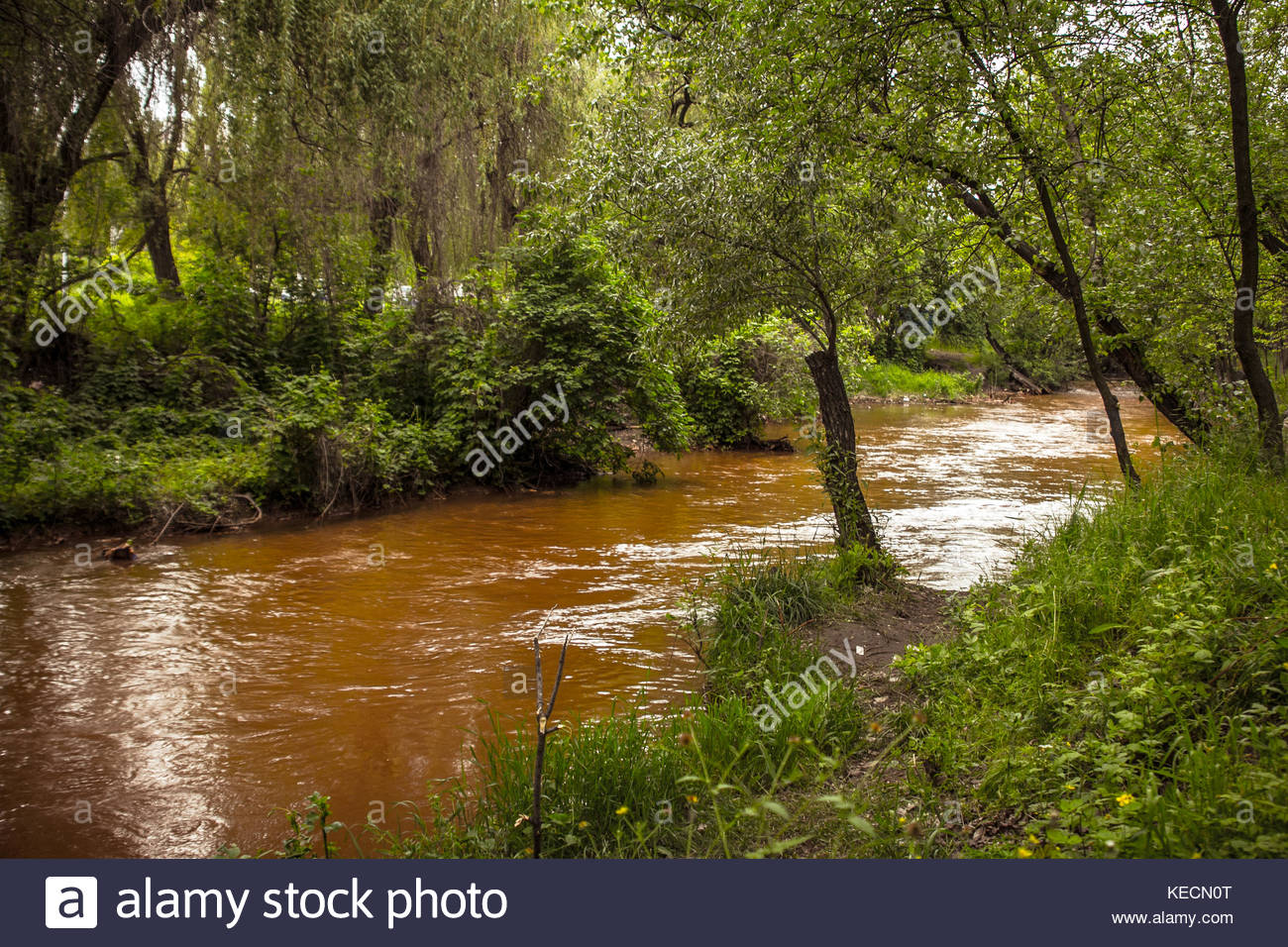Brown polluted river with nice green shores in the city park - Stock Image