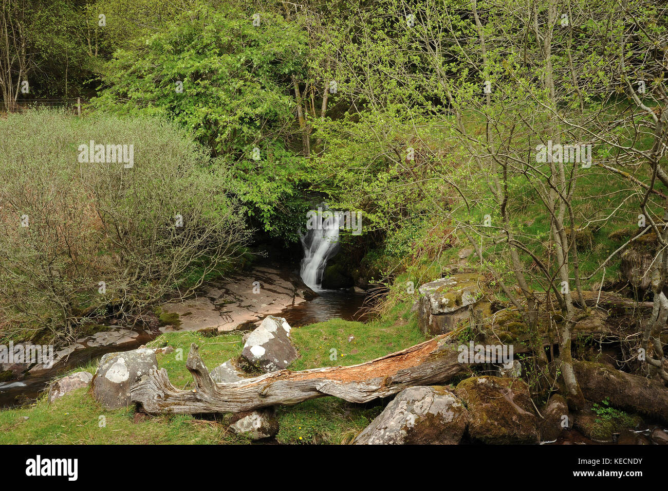 Last waterfall on Nant Bwrefwr. - Stock Image