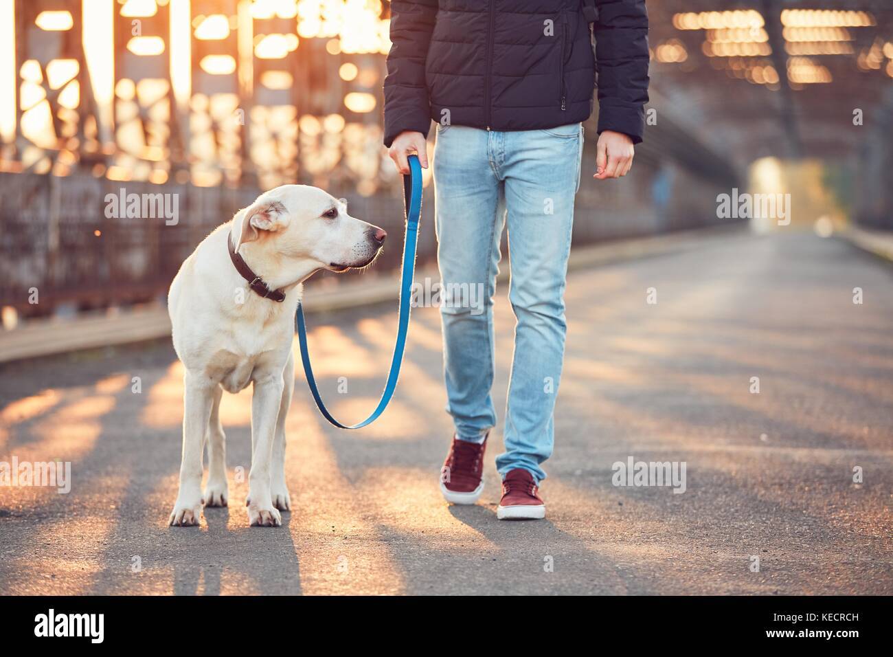 Morning walk with dog. Young man with his labrador retriever on the iron bridge at the sunrise. - Stock Image