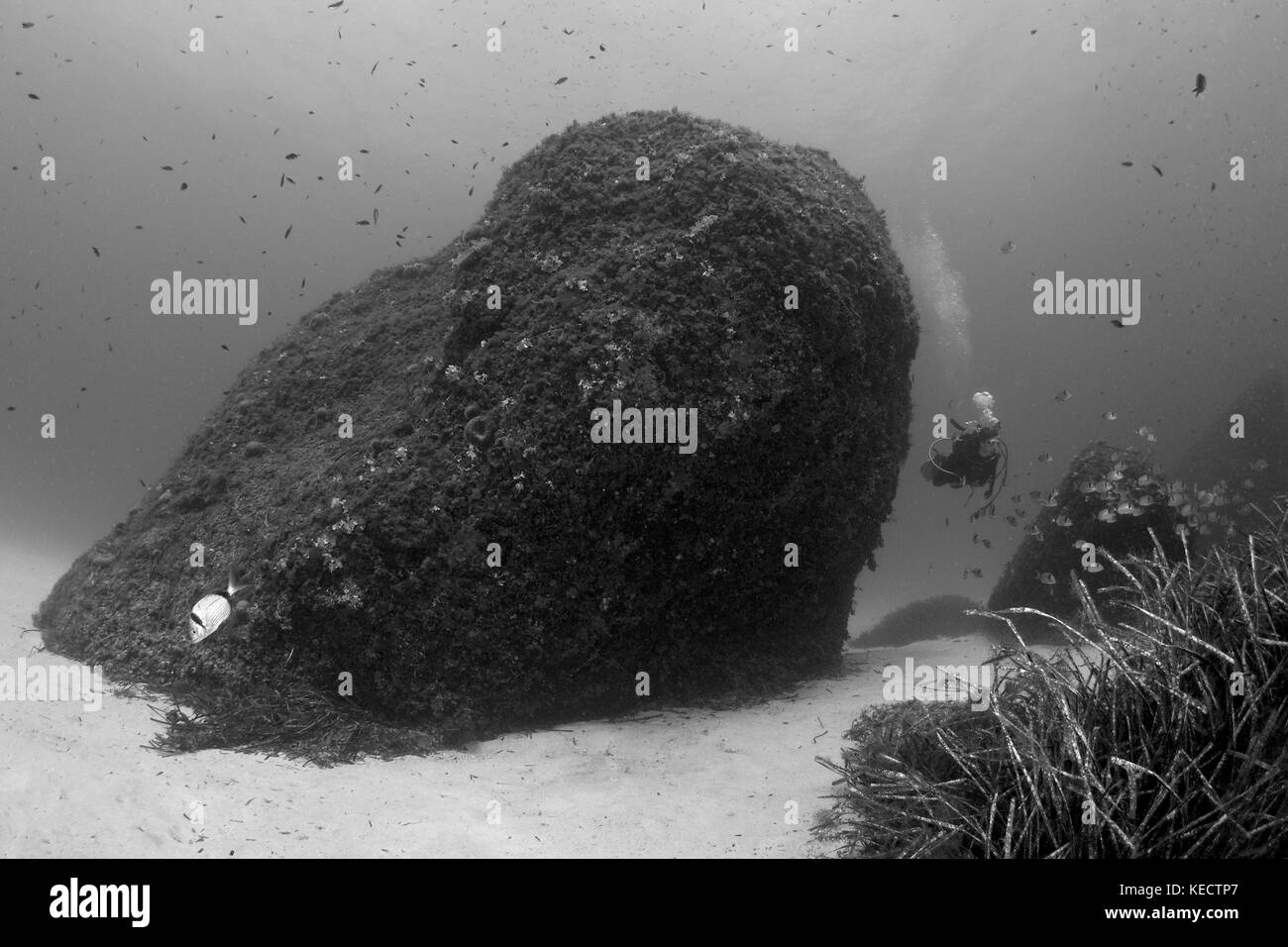 B&W Underwater landscape showing a diver at Es Banc dive site at Formentera (Balearic Islands, Spain) - Stock Image