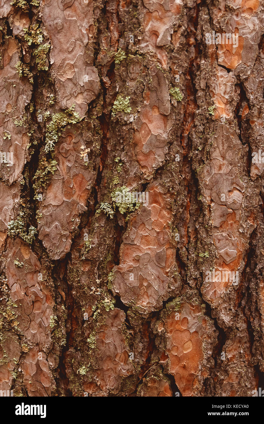 Pine Bark Garden Stock Photos & Pine Bark Garden Stock Images - Alamy