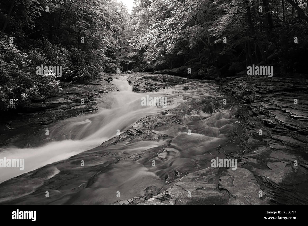 A mountain stream flowing though the woods in black and white - Stock Image