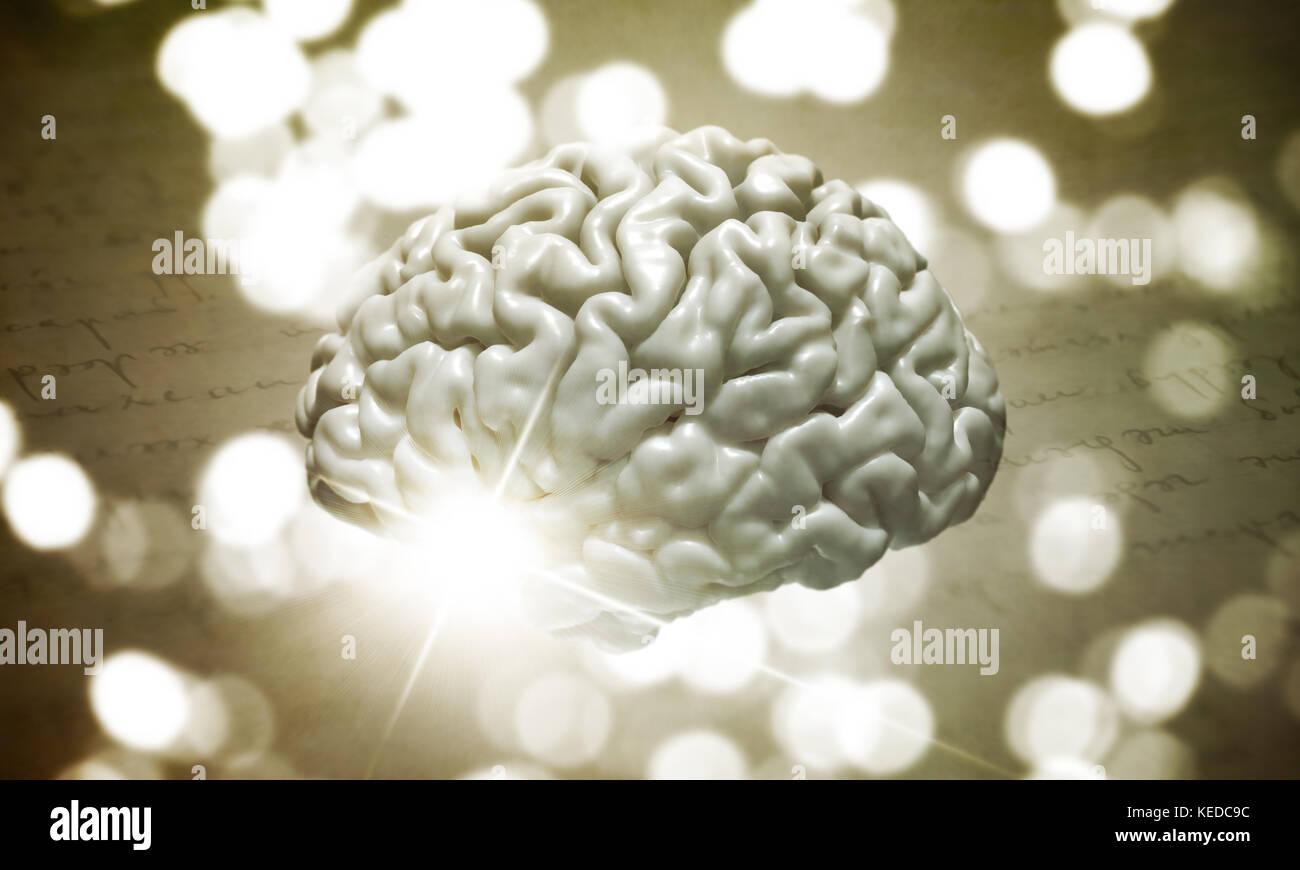 A human brain - Stock Image