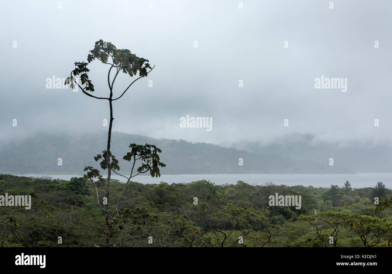 Single tree on the slops of Arenal volcano with Lake Arenal in the background - Stock Image
