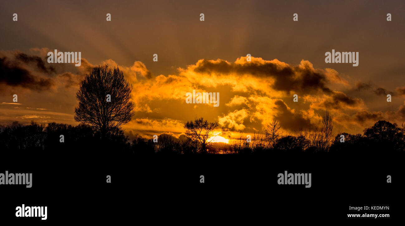 The silhouettes of trees in front of  a beautiful sunset - Stock Image