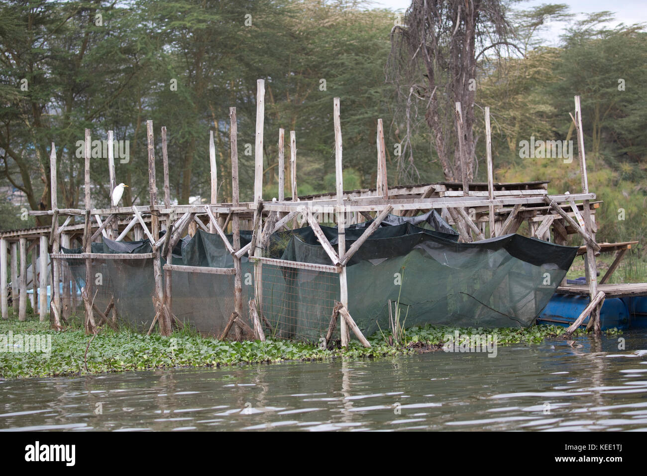 Nets for holding live crayfish by jetty Chinese tourist lodge Lake Naivasha Kenya - Stock Image