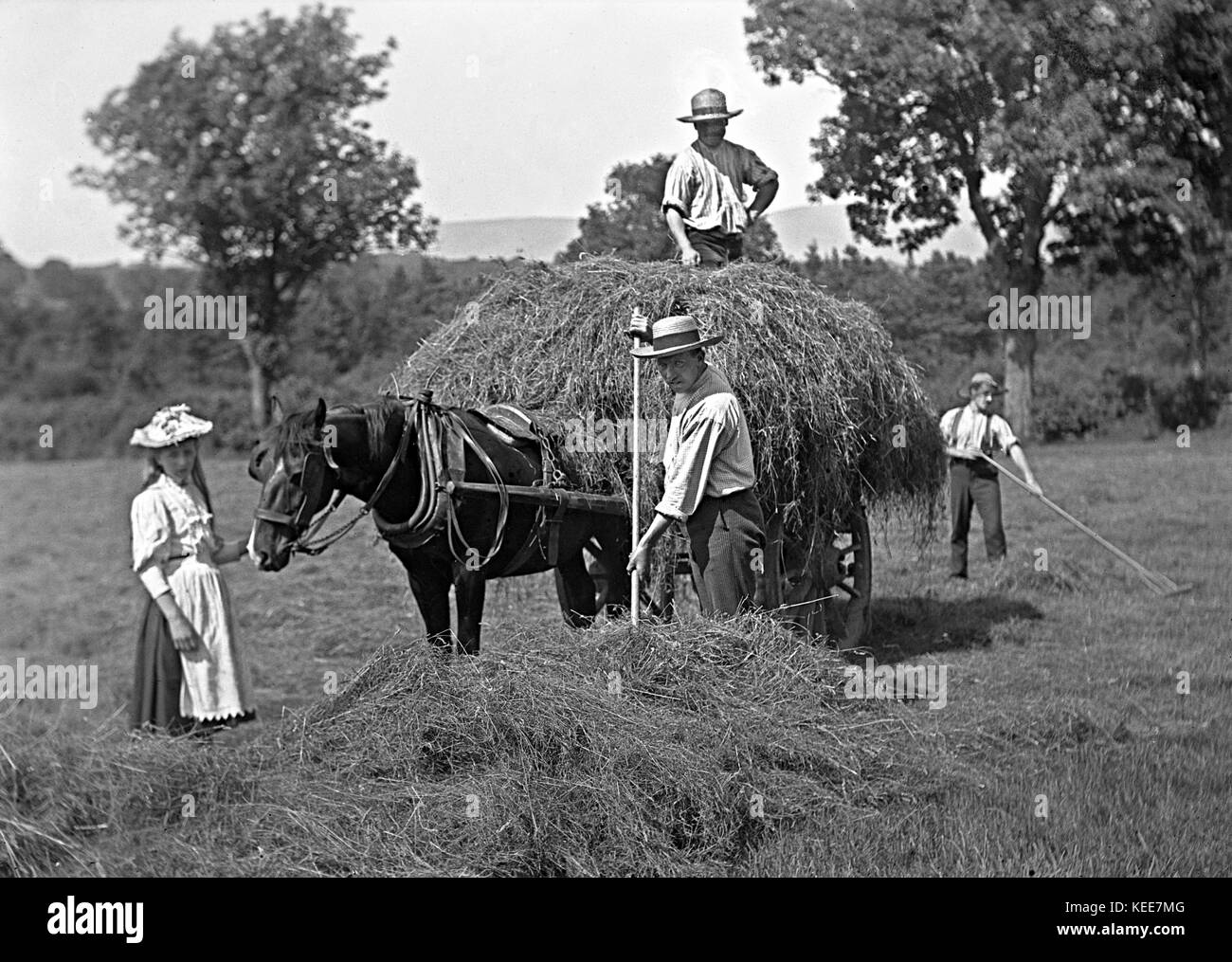 Haymaking in Dorchester, Dorset c1900.  Photograph by Tony Henshaw *** Local Caption *** From the wholly-owned original - Stock Image