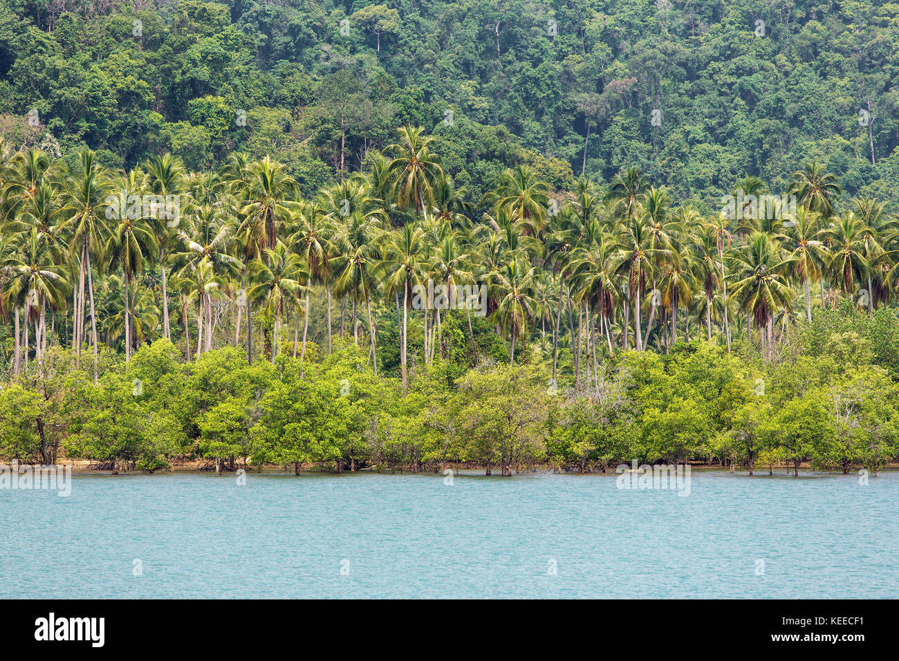 Tropical bay landscape with a palm trees in Thailand - Stock Image
