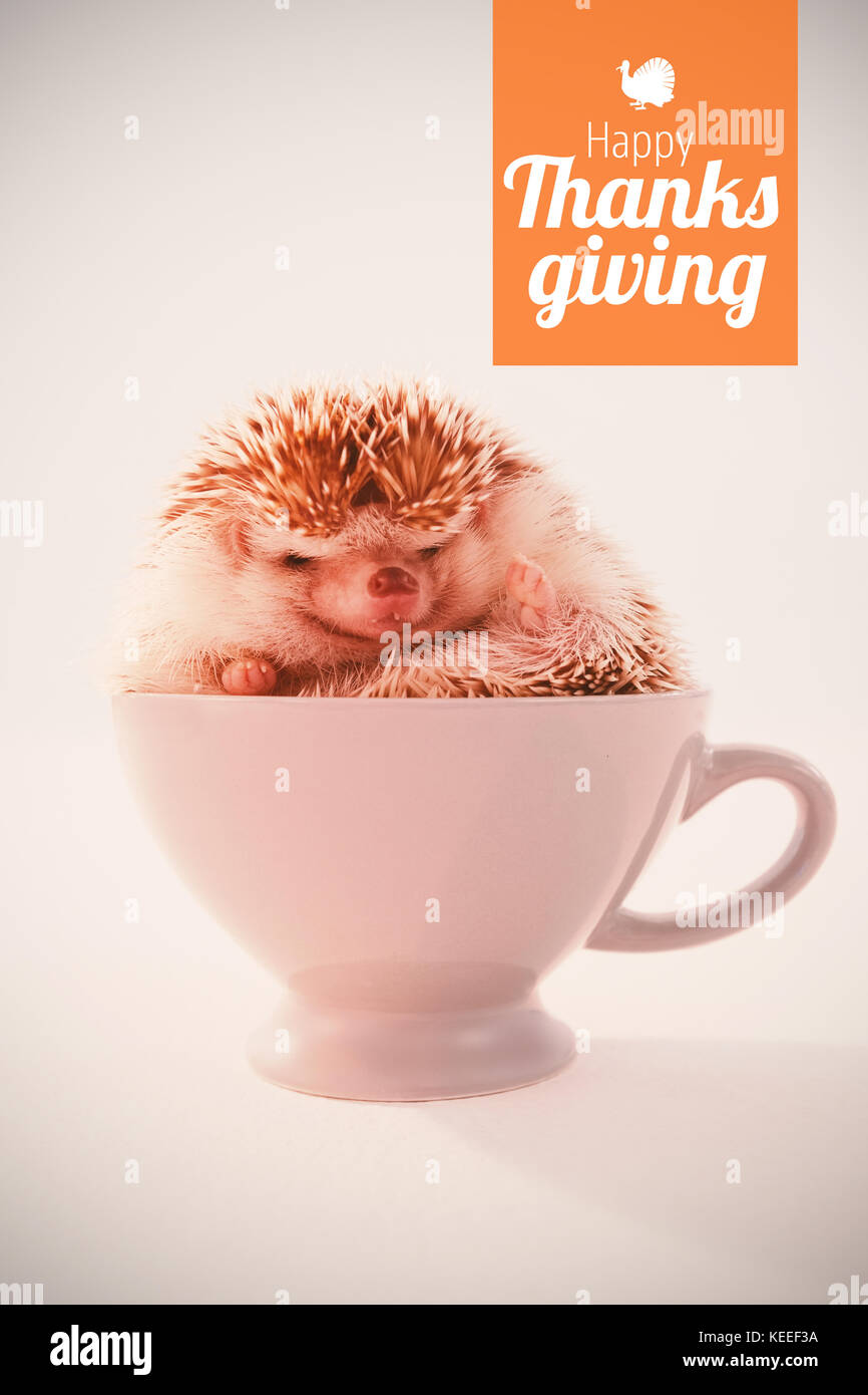 Thanksgiving greeting text against hedgehog in white cup of tea - Stock Image