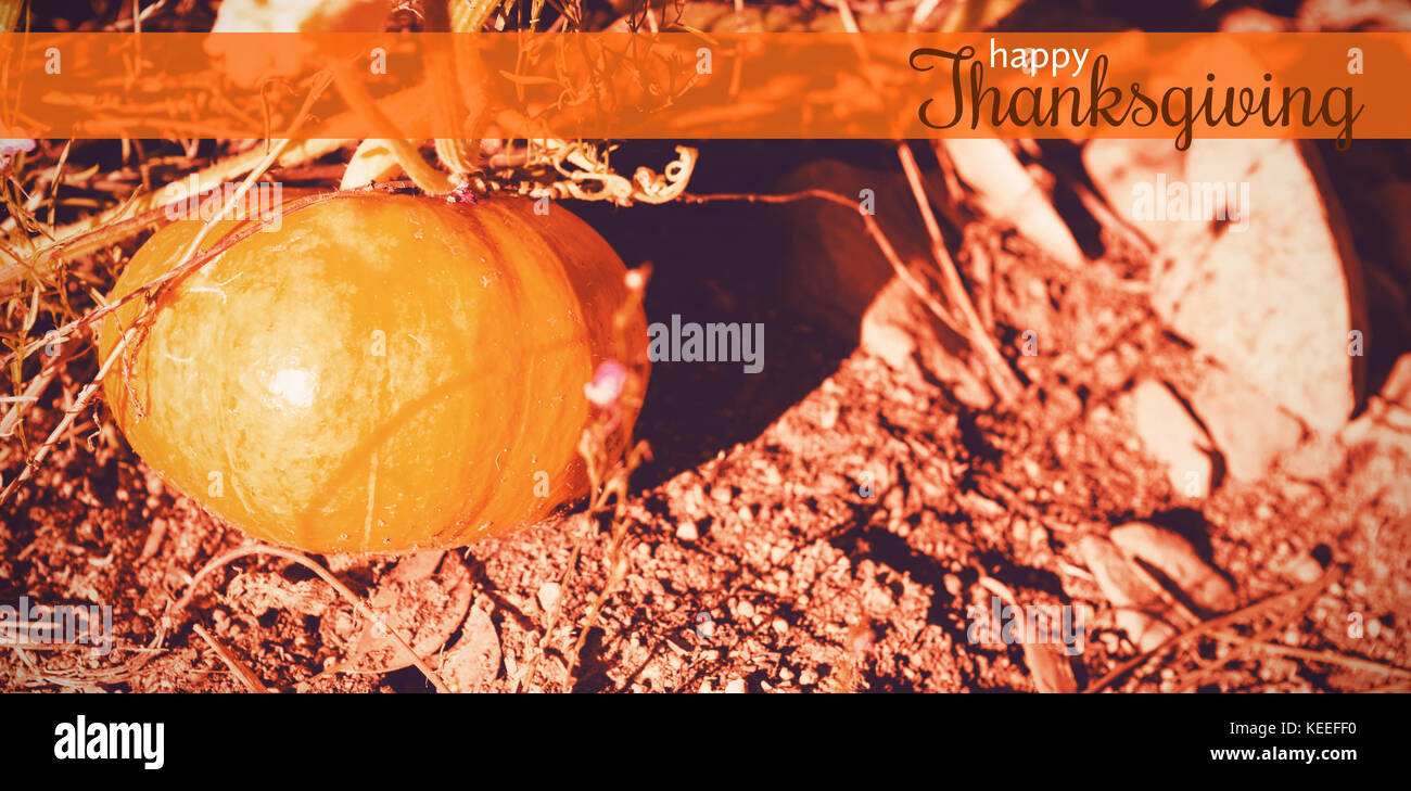 Digital generated image of thanksgiving greeting against pumpkin growing in field Stock Photo