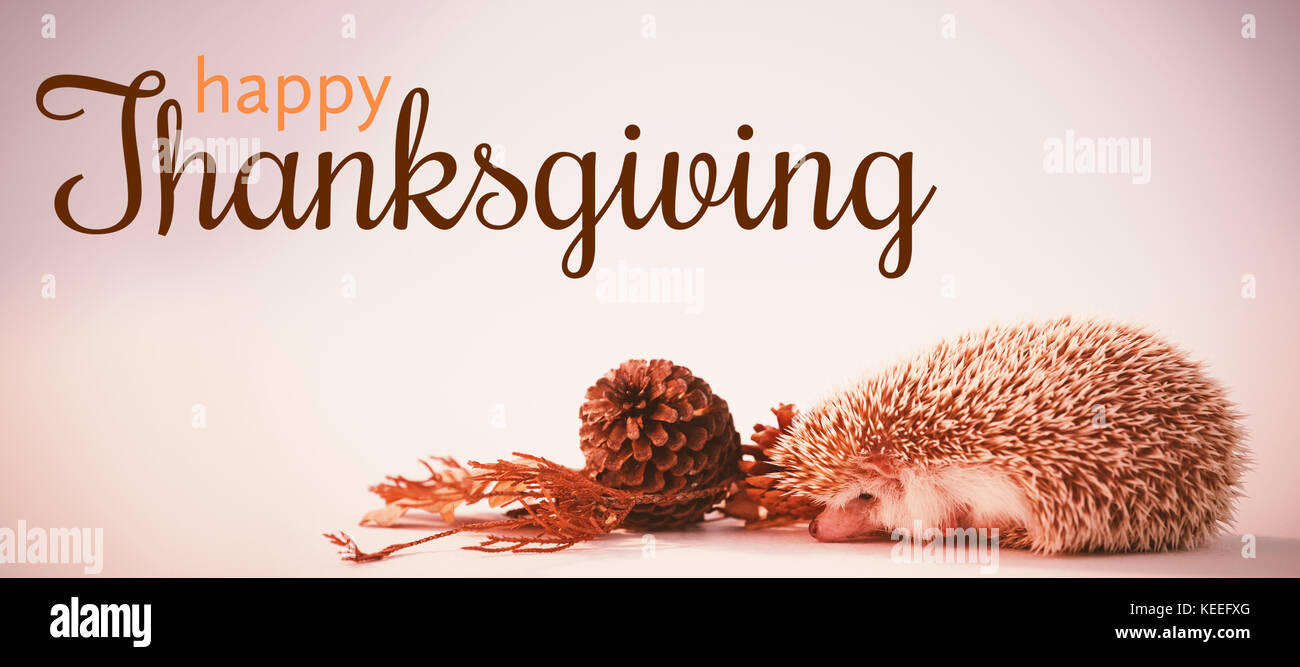 Digital generated image of thanksgiving greeting against hedgehog on white background - Stock Image