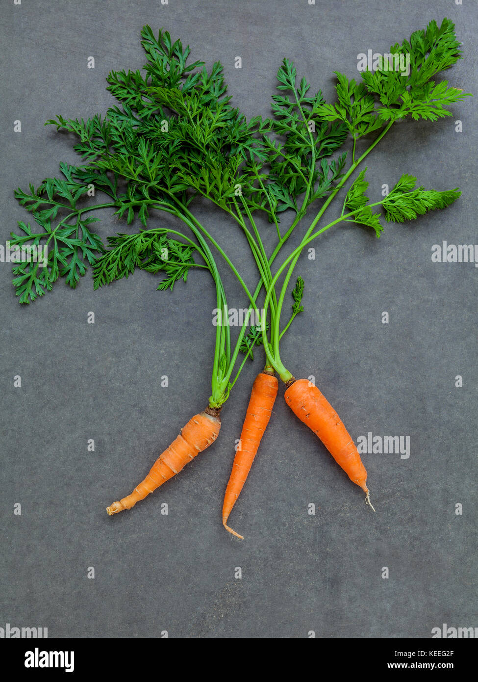 Fresh carrots bunch on dark concrete background. Raw fresh carrots with tails. Fresh organic carrots with leaves. - Stock Image