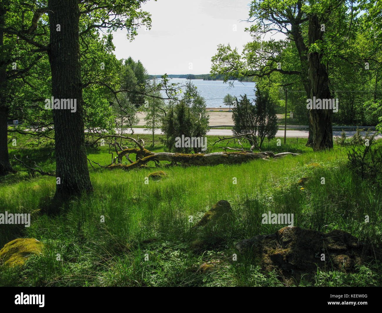 SPARREHOLM Sörmlands Protected oak forest as nature area 2017 - Stock Image