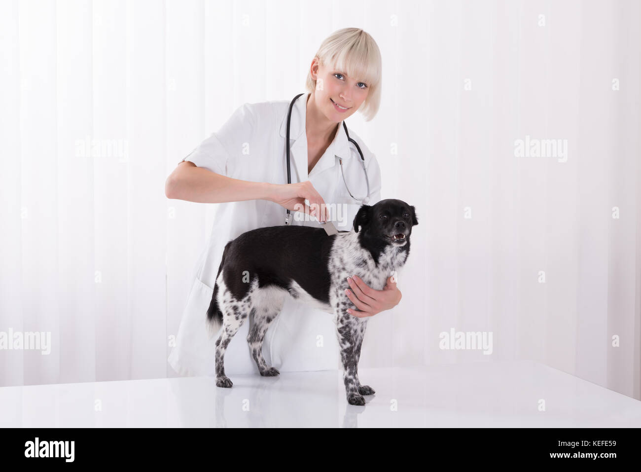 Smiling Young Female Vet Examining Dog's Hair With Comb In Clinic - Stock Image