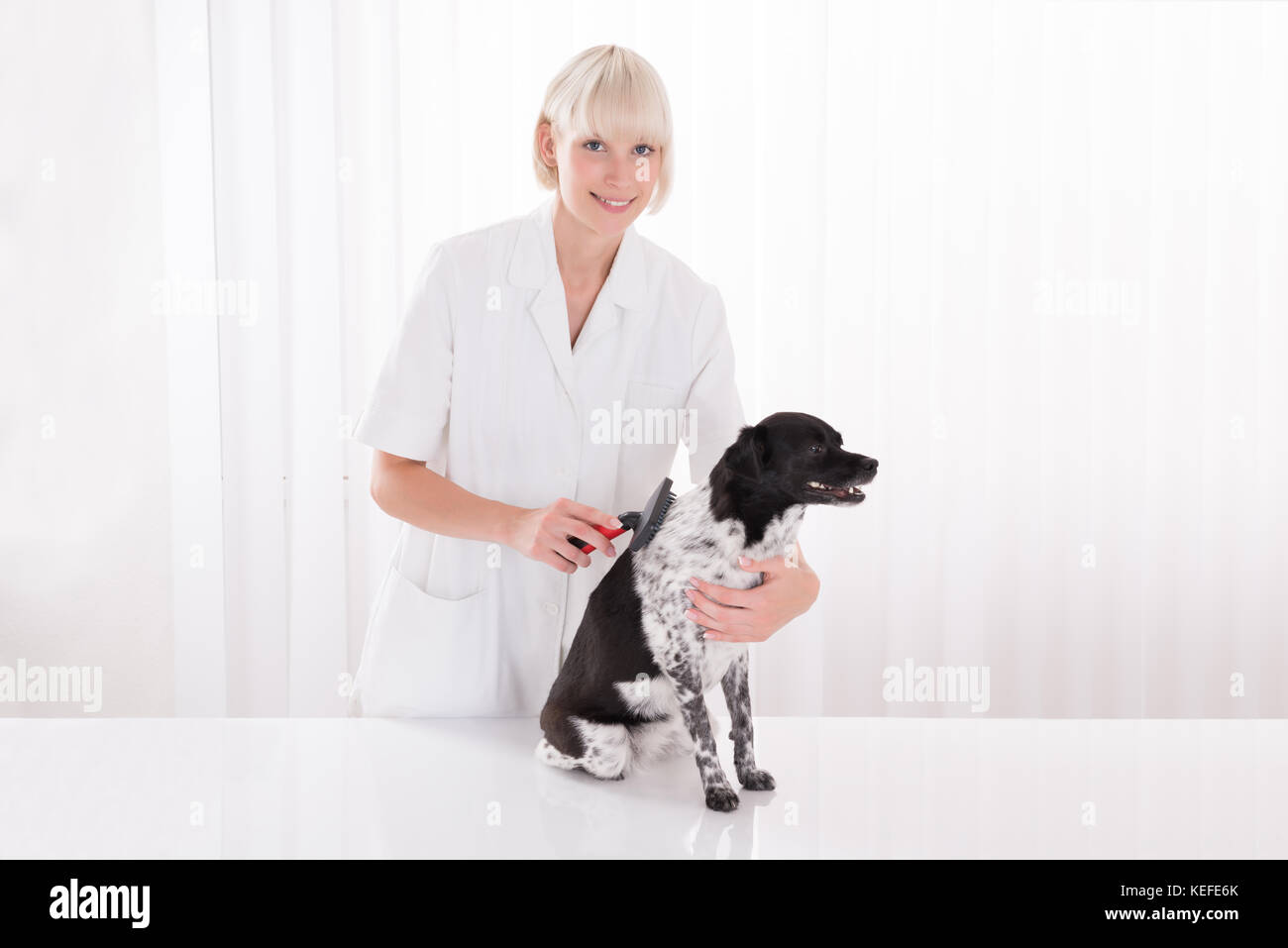 Young Happy Female Vet Grooming Dog's Hair - Stock Image