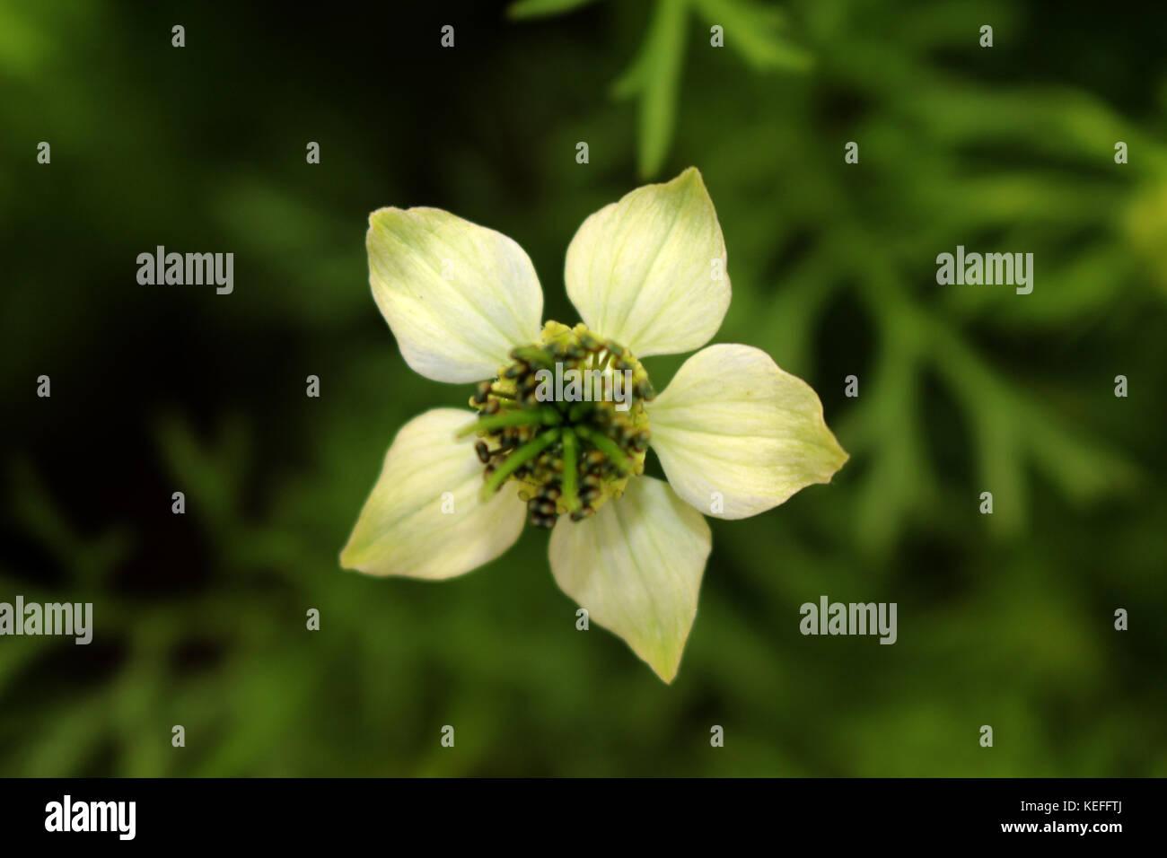 Winter Flower, Very rare capture from random village of Bangladesh. - Stock Image