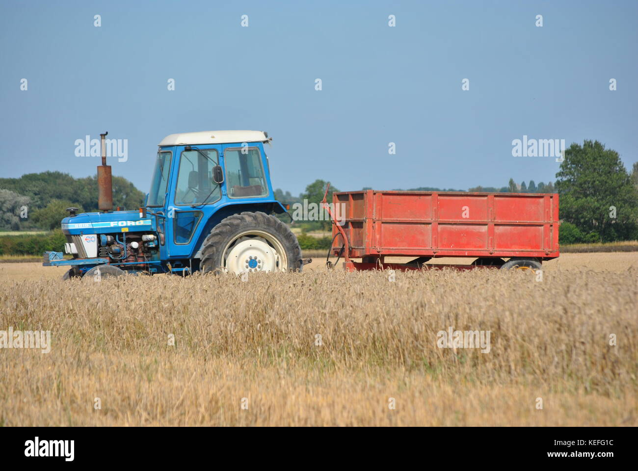Blue Ford tractor with red trailer  in corn field at harvest time in England - Stock Image
