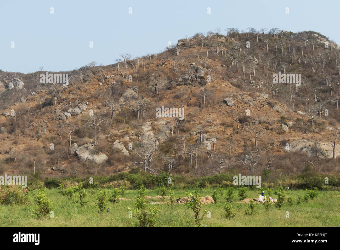farmers in the field of agriculture. Angola, Stock Photo