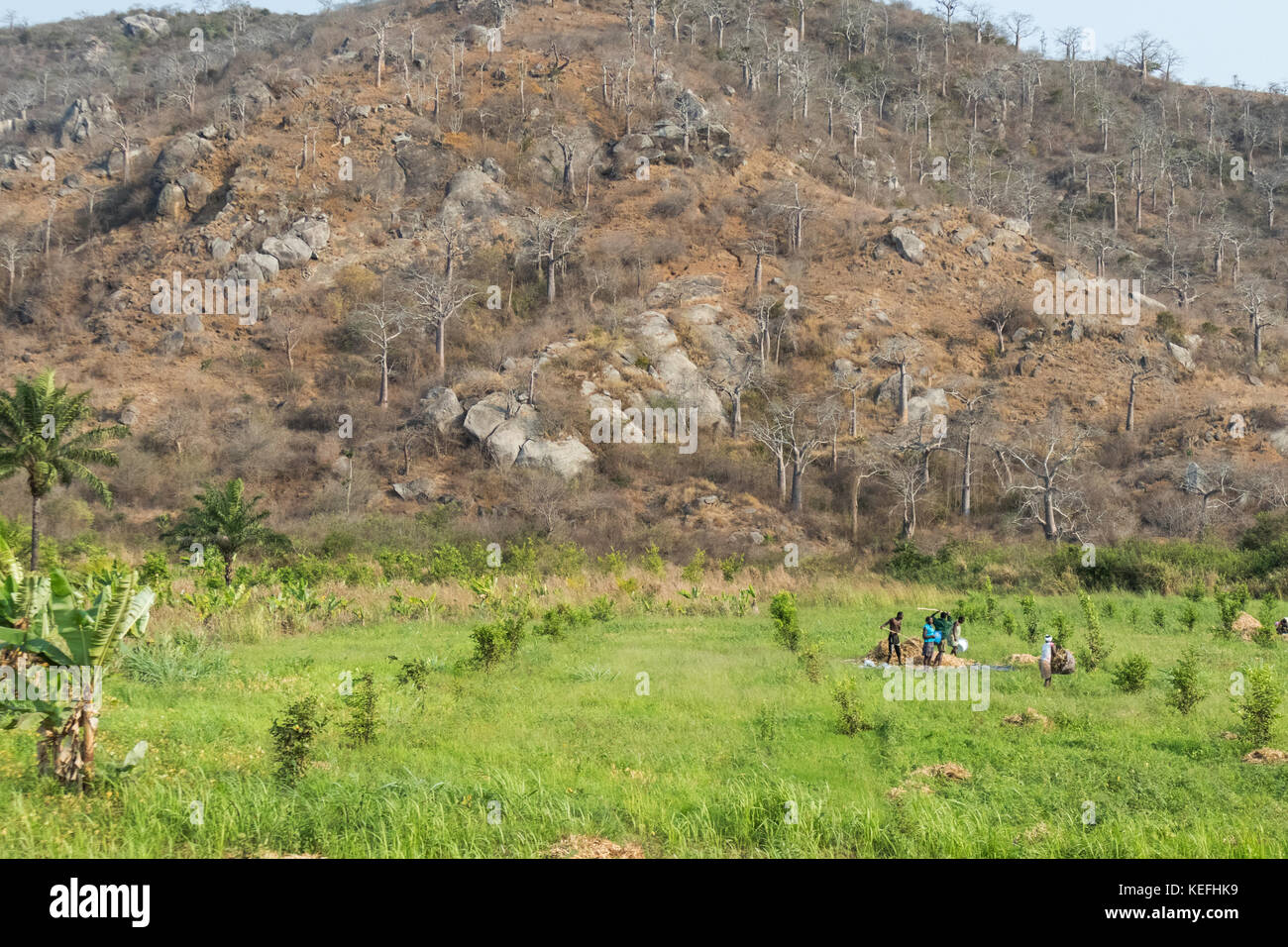 farmers in the field of agriculture. Angola, - Stock Image