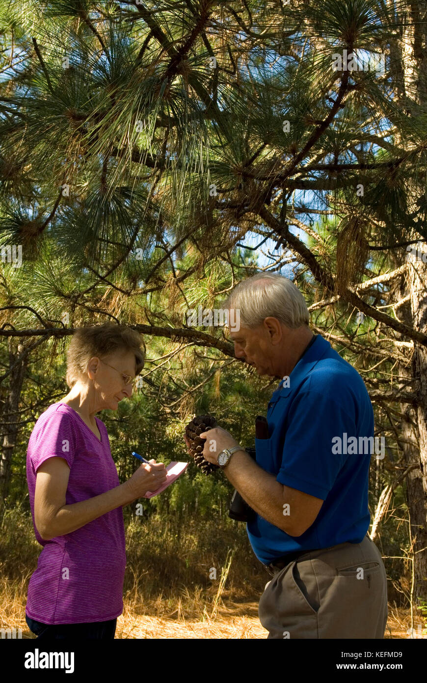 Caucasian couple and long leaf pine trees, Bethune, South Carolina, USA. Long leaf pine trees are used for mulch - Stock Image
