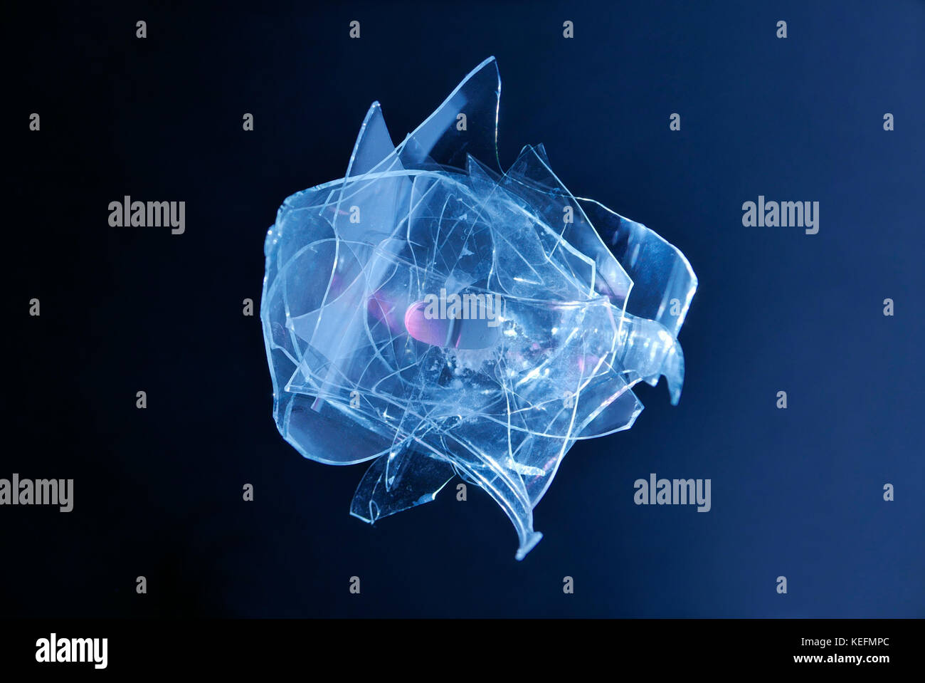 Side effects of drugs, red pill on broken rose shaped glass with dark blue background Stock Photo