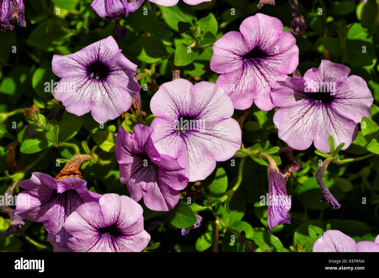Trumpet Shaped Flowers Stock Photos Trumpet Shaped Flowers Stock