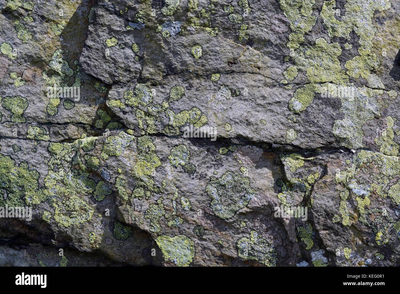 Lichen on Rocks, Northumberland - Stock Image