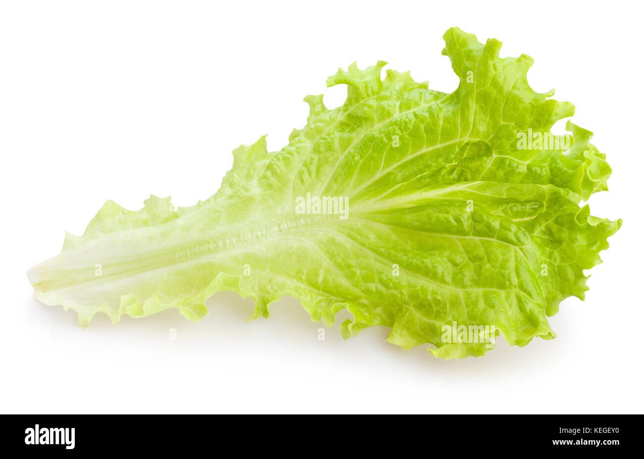 lettuce leaf path isolated - Stock Image