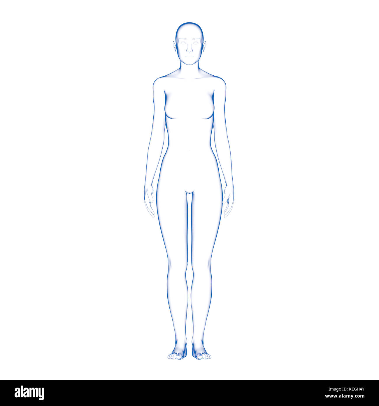 Female Human Body Shape - Stock Image