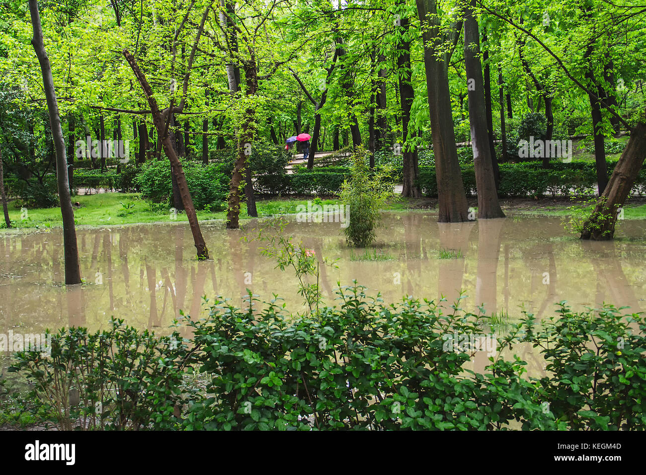 Park flooded by the rain with reflections on the puddles - Stock Image