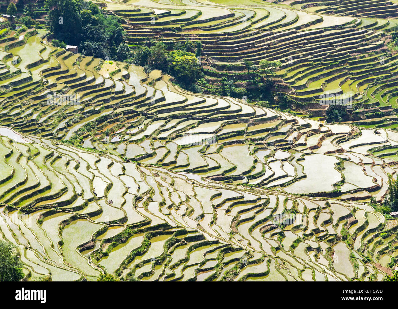Yuanyang Rice Terraces, Yunnan - China - Stock Image