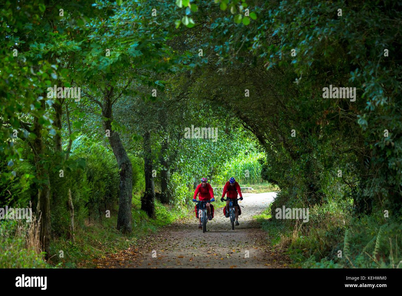 Cyclists on the Camino de Santiago Pilgrim's route to Santiago de Compostela in Galicia, Spain - Stock Image