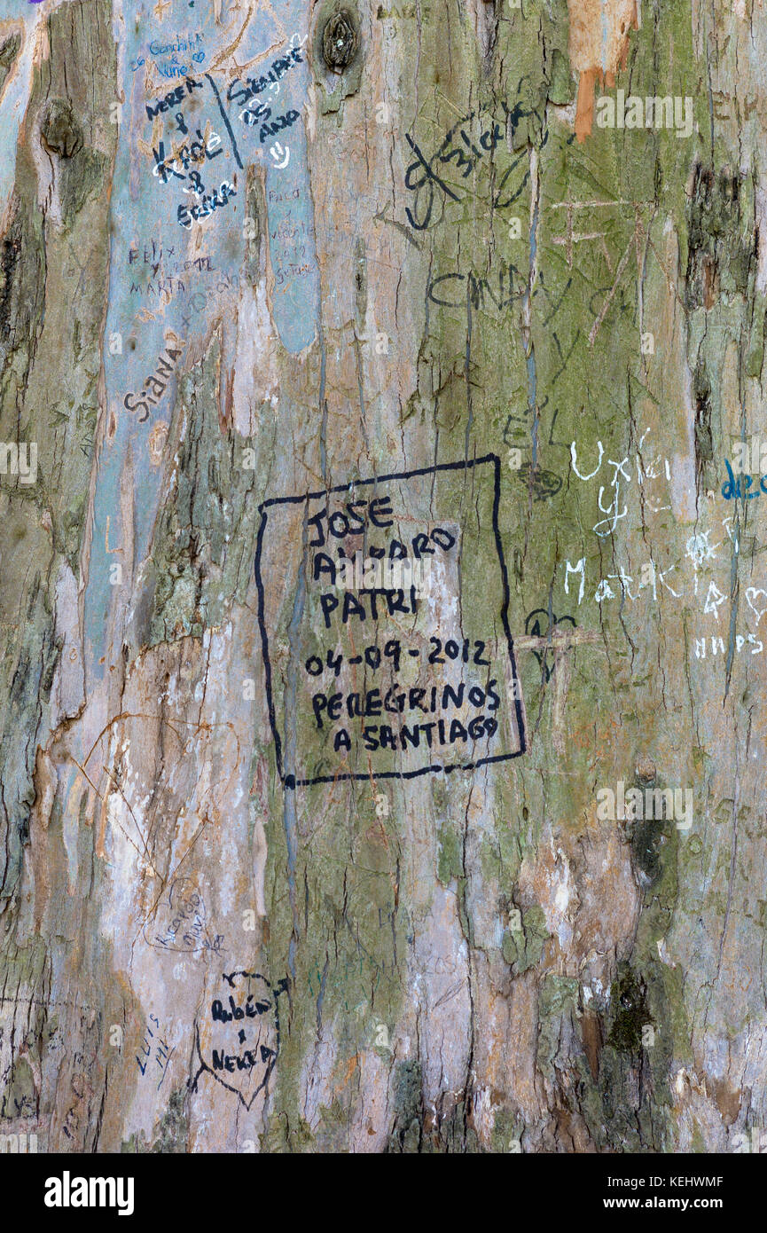Pilgrims - Peregrinos - on Pilgrim Trail write names in message on tree trunk in  Alameda Park in Santiago de Compostela, - Stock Image