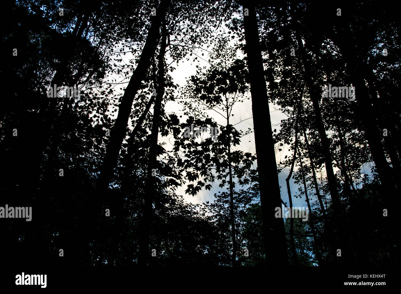 Dark Forest - Stock Image