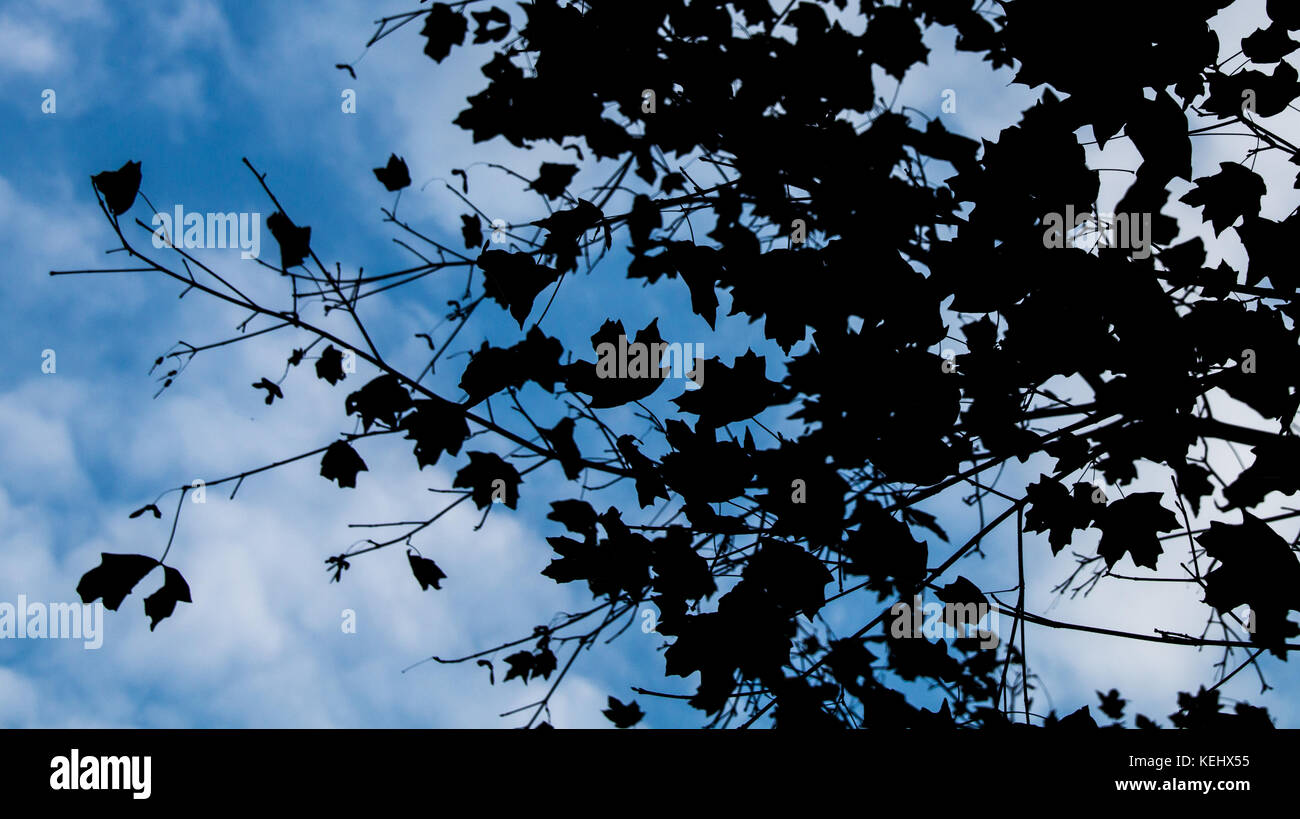 Leafs in shadow - Stock Image