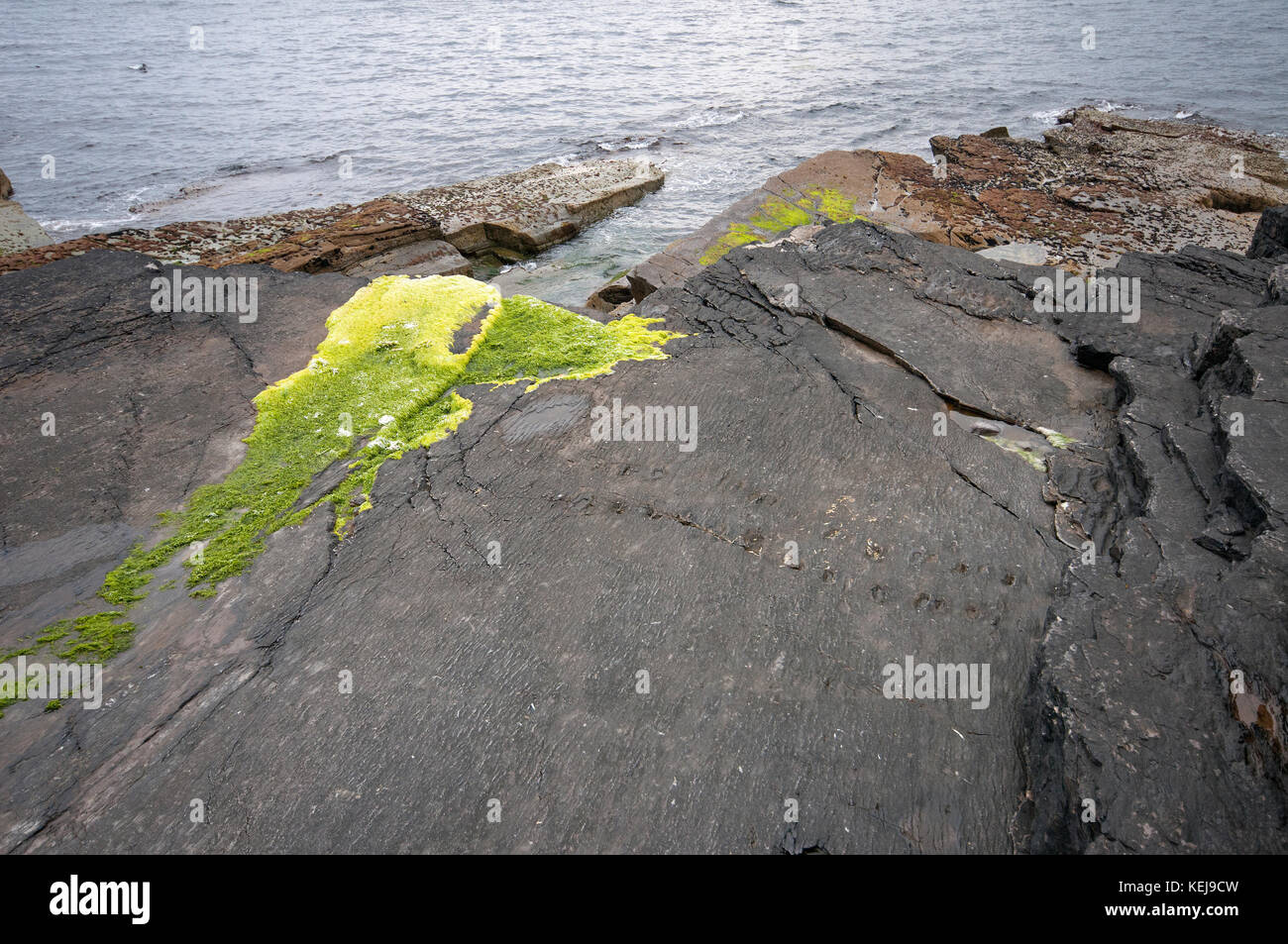 Tetrapod trackway in Valentia Island, County Kerry, Ireland - Stock Image