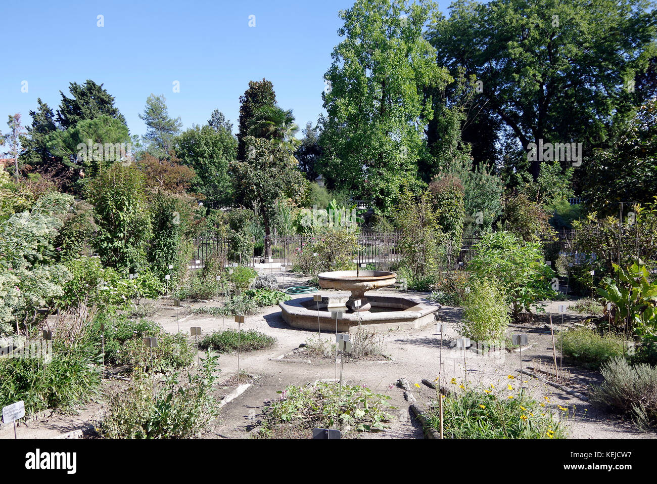 Orto Botanico di Padova, Padua Botanical garden, the world's oldest, in Italy, One of the circles in squares - Stock Image