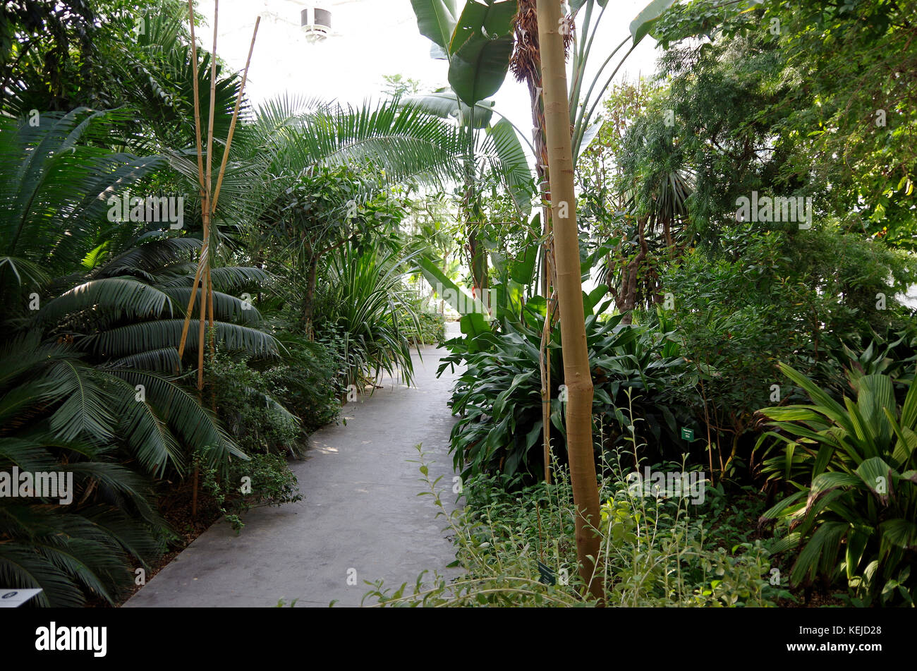 Orto Botanico di Padova, Padua Botanical garden, the world's oldest, in Padua, Italy, Interior of sub-humid - Stock Image