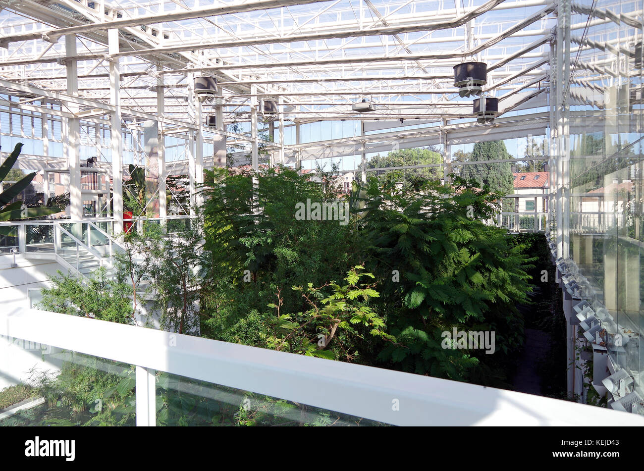 Orto Botanico di Padova, Padua Botanical garden, the world's oldest, in Padu, Italy, Interior of Sub-humid tropical - Stock Image