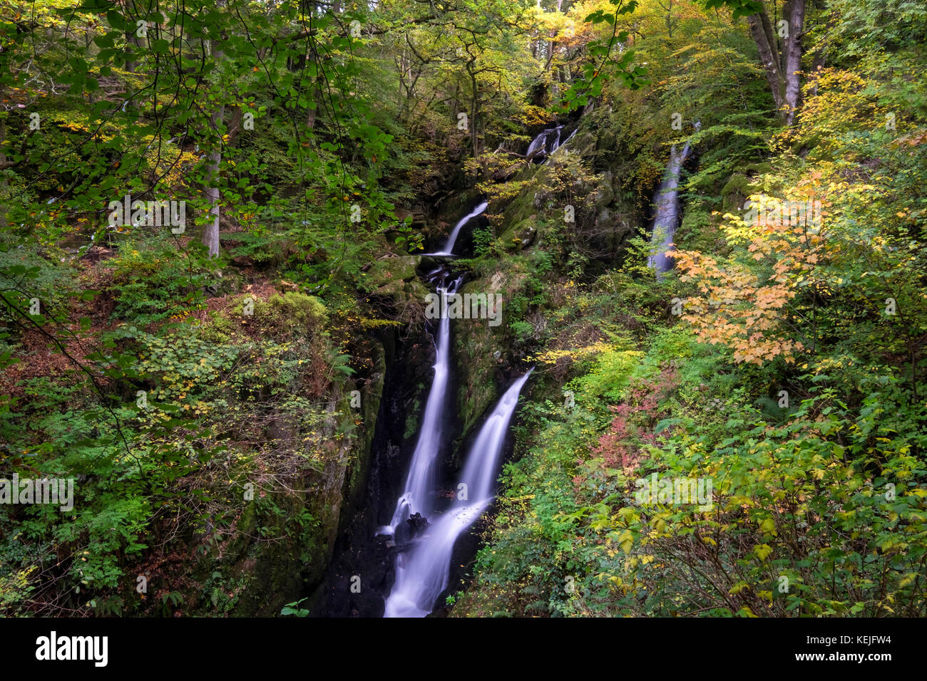 Stock Ghyll Force waterfall in autumn, near Ambleside, Lake District National Park, Cumbria, England, UK - Stock Image